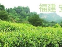"""67%网民赞成""""清新福建""""作为福建旅游形象标识"""
