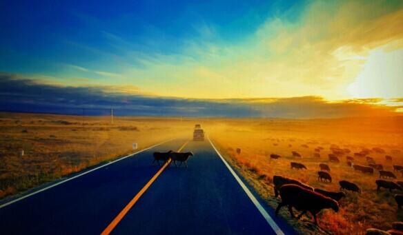 新疆旅游集团挂牌8532万整体转让
