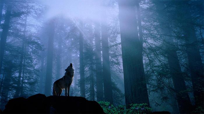 """旅游业""""互联网+"""" 谁是那匹来了的狼?"""