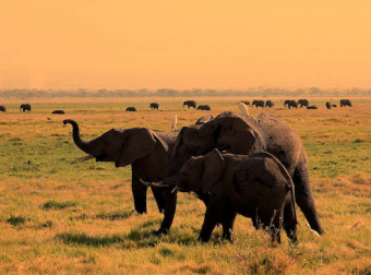 """途牛:南非向中国游客递出""""橄榄枝""""中国游客南非游升温"""