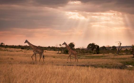 签证放开、旅游资源独特 非洲成出境游新兴热门目的地