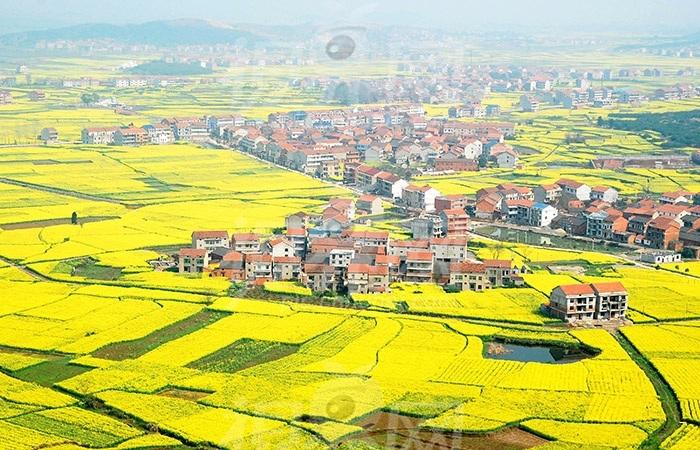 上海发布乡村振兴实施方案,惠及非农就业、农民增收等