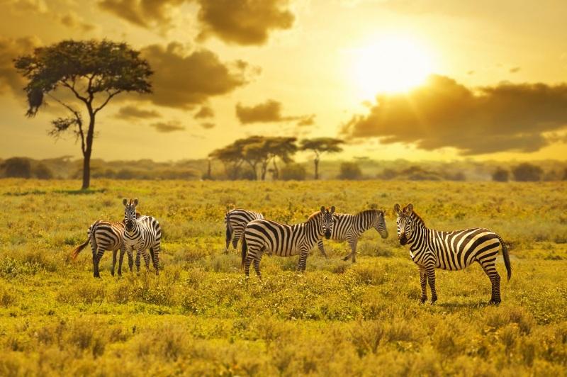 """途牛:去非洲避暑不再是段子 肯尼亚、南非等成避暑游""""网红""""目的地"""