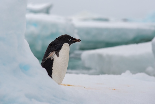 """近三分之一是90后,飞猪让""""南极不难及"""""""