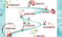 春天看花预订涨400%  飞猪直播推出多国樱花大赏